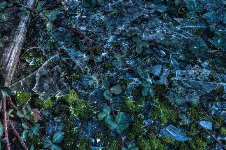 Vines and Broken Glass