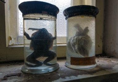 frog & heart