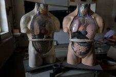 torsos